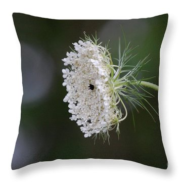 jammer Garden Lace 2 Throw Pillow by First Star Art
