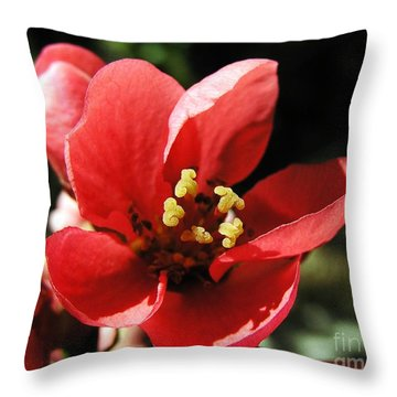 Throw Pillow featuring the photograph Japanese Apple Flower by Vesna Martinjak