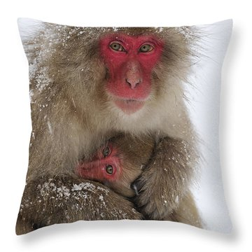 Japanese Macaque Warming Baby Throw Pillow