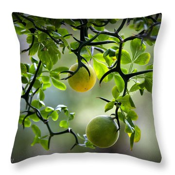 Japanese Orange Tree Throw Pillow