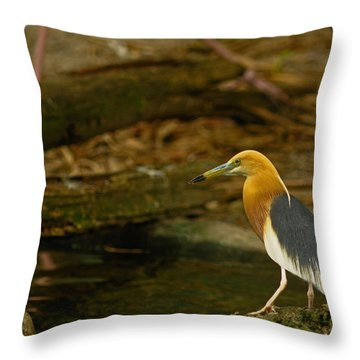 Javan Pond Heron  Throw Pillow