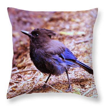Jay  Throw Pillow by Jeff Swan