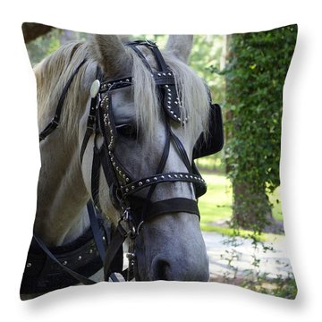 Jekyll Horse Throw Pillow by Laurie Perry