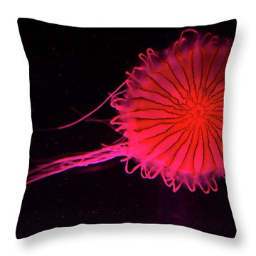 Jellyfish In Aquarium Of Quebec Throw Pillow