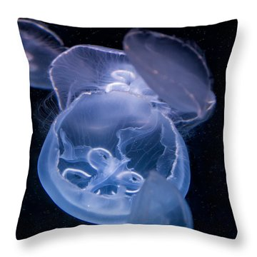 Jellyfish Throw Pillow by Tim Stanley