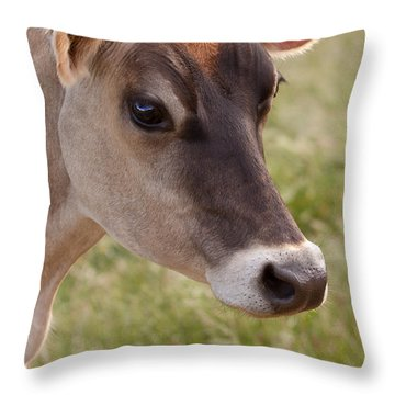 Jersey Cow Portrait Throw Pillow