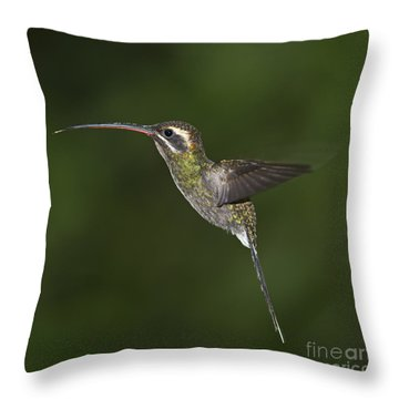 Jewel On Wings.. Throw Pillow by Nina Stavlund