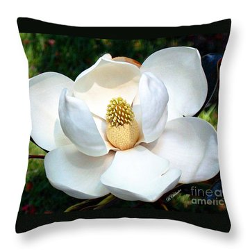 Throw Pillow featuring the photograph John's Magnolia by Barbara Chichester