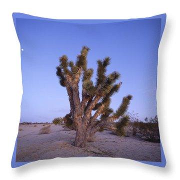 Solitude Of The Joshua Tree Throw Pillow by Shaun Higson