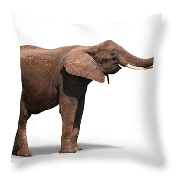 Joyful Elephant Isolated On White Throw Pillow