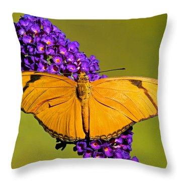 Julia Butterfly Dryas Iulia Throw Pillow