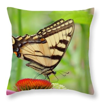 July Swallowtail Throw Pillow by MTBobbins Photography