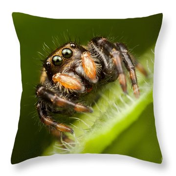 Jumping Spider Phidippus Clarus I Throw Pillow by Clarence Holmes