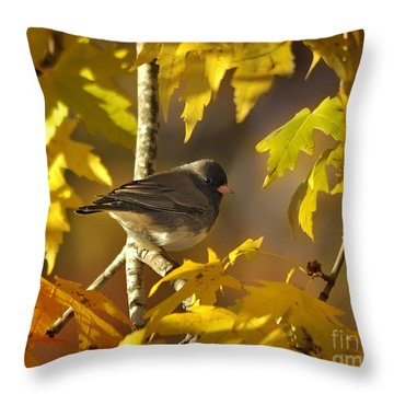 Junco In Morning Light Throw Pillow by Nava Thompson