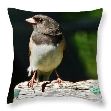 Junco Simplicity Throw Pillow by VLee Watson