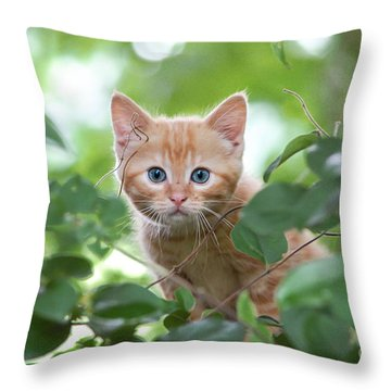 Jungle Kitty Throw Pillow by Debbie Green