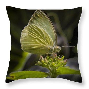 Just A Taste Throw Pillow by Jean Noren