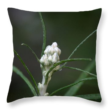 Just Budding Throw Pillow by Denyse Duhaime