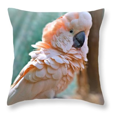 Just Call Me Fluffy Throw Pillow by Tara Potts