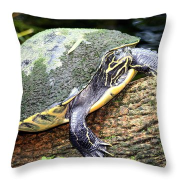 Just Chilling Throw Pillow by Debra Forand
