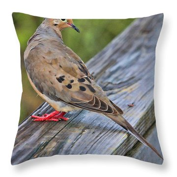 Just Hanging Around Throw Pillow by Deborah Benoit