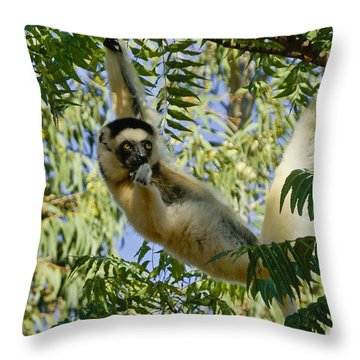 Just Hanging Around Throw Pillow by Michele Burgess