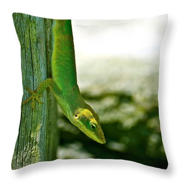 Just Hanging... Throw Pillow