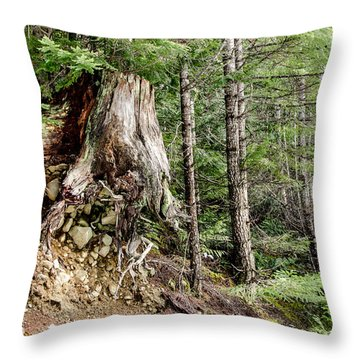 Just Hanging On Old Growth Forest Stump Throw Pillow