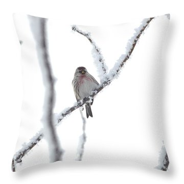 Throw Pillow featuring the photograph Just Hanging Out by Dacia Doroff