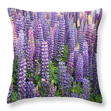 Throw Pillow featuring the photograph Just Lupins by Nareeta Martin