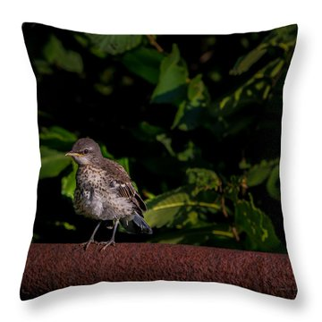 Just Out Of The Nest Throw Pillow