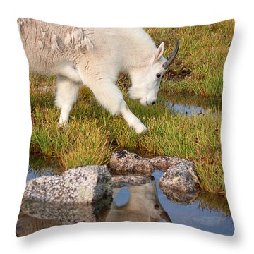 Just Passing By Throw Pillow by Jim Garrison