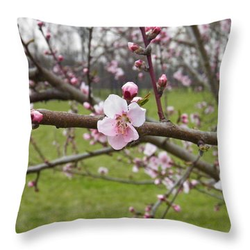 Just Peachy 3 Throw Pillow by Nick Kirby