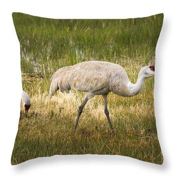 Just Poking Around Throw Pillow by Jean Noren