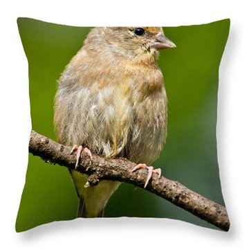 Juvenile American Goldfinch Throw Pillow by Jeff Goulden