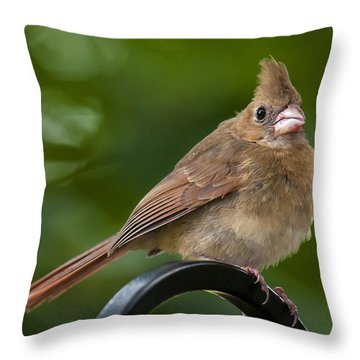 Juvenile Cardinal Throw Pillow
