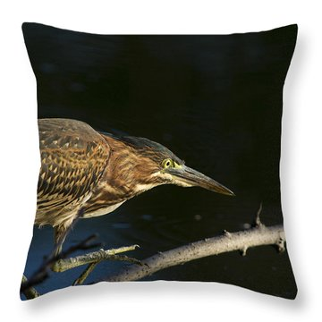 Juvenile Green Heron Throw Pillow