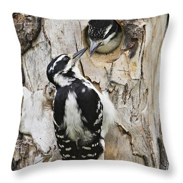 Juvenile Hairy Woodpecker Is Fed Throw Pillow by Ray Bulson
