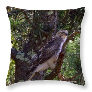 Juvenile Red-tailed Hawk Throw Pillow by CapeScapes Fine Art Photography