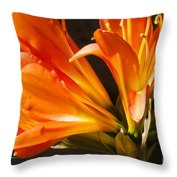Kaffir Lily Glow Throw Pillow