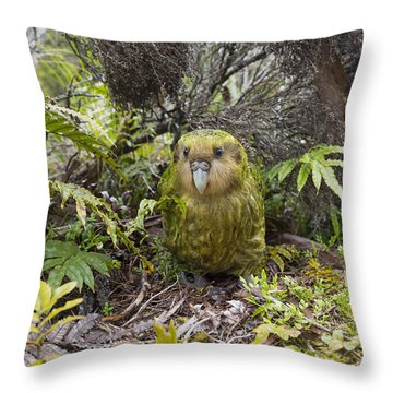 Throw Pillow featuring the photograph Kakapo Male In Forest Codfish Island by Tui De Roy