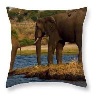 Throw Pillow featuring the photograph Kalahari Elephants Preparing To Cross Chobe River by Amanda Stadther