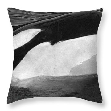 Kandu Orca Seattle Aquarium 1969 Pat Hathaway Photo Killer Whale Seattle Throw Pillow by California Views Mr Pat Hathaway Archives