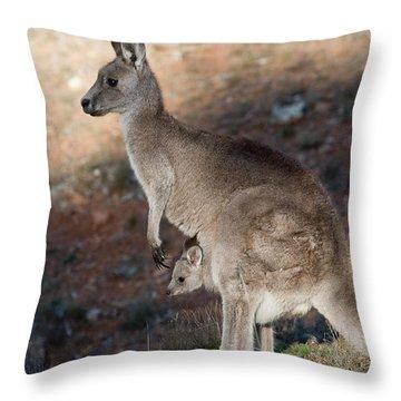 Kangaroo And Joey Throw Pillow
