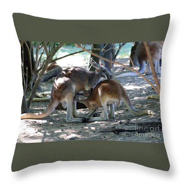 Kangaroo Nurse-6 Throw Pillow by Gary Gingrich Galleries