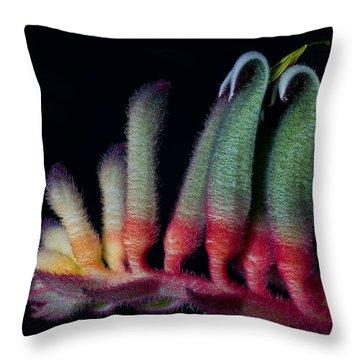 Kangaroo Paws Throw Pillow
