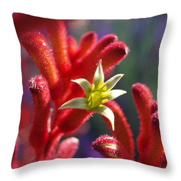 Kangaroo Star Throw Pillow