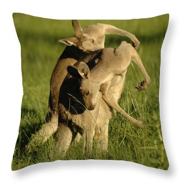 Kangaroos Taking A Bow Throw Pillow by Bob Christopher