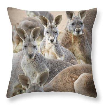 Kangaroos Waga Waga Australia Throw Pillow by Jim Julien