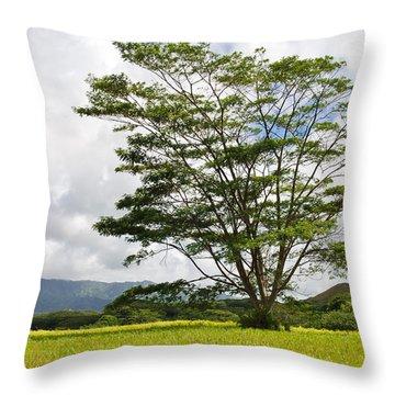 Throw Pillow featuring the photograph Kauai Umbrella Tree by Shane Kelly